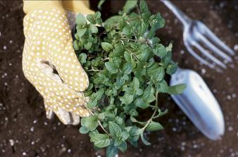 garden hand