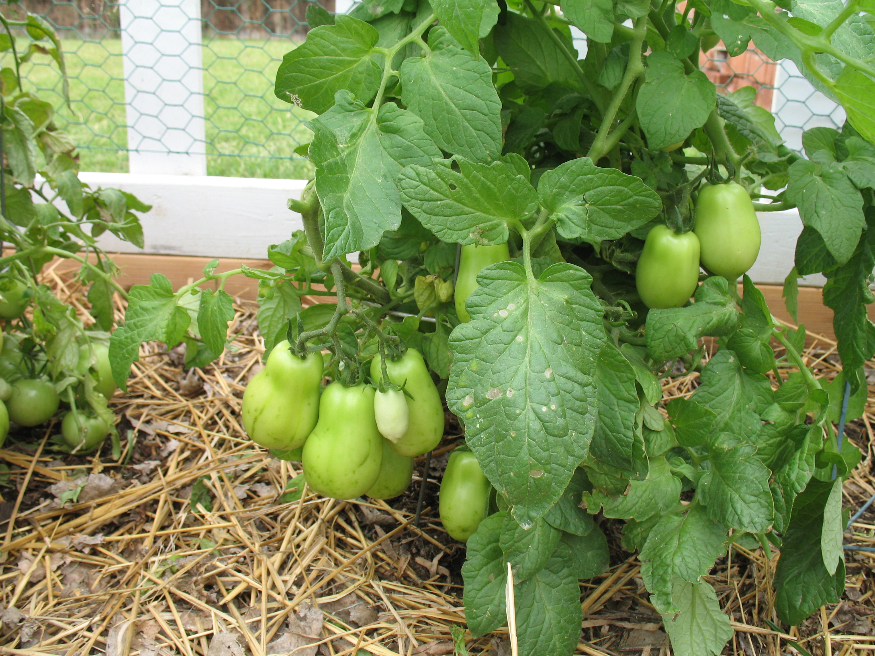 Charmant For Those Ambitious Enough To Grow Their Own Backyard Garden, Aaryn  Suggests Starting Out Small With A U201ctest Run Type Of Plot First Before  Delving Into An ...